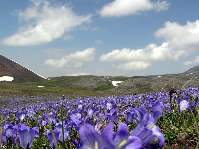 Армения цветы фото, букете невесты