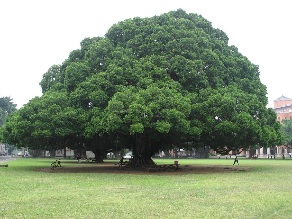 фото крупных деревьев власти большевиков