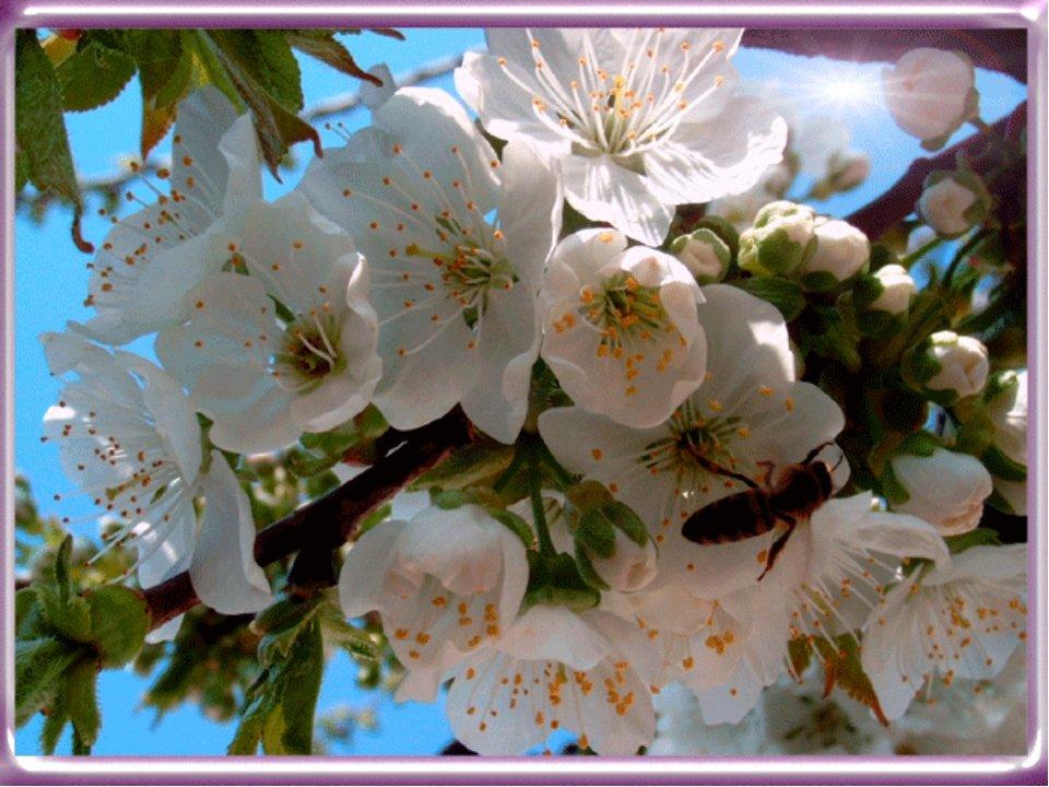 Сады цветут открытки