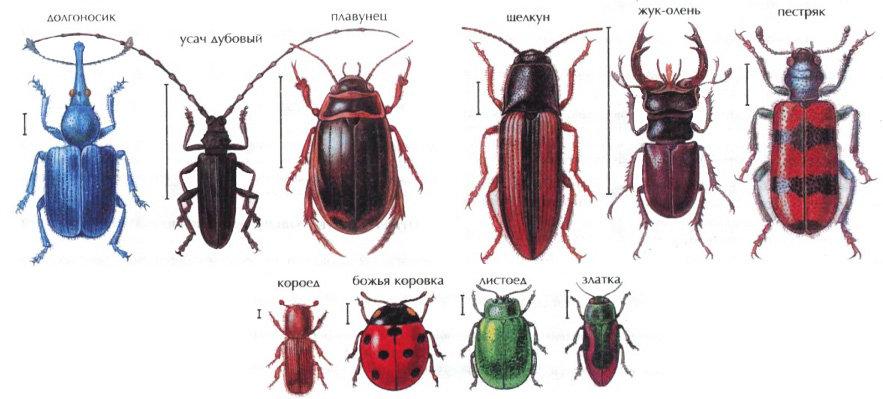 Международный день, классификация жуков в картинках