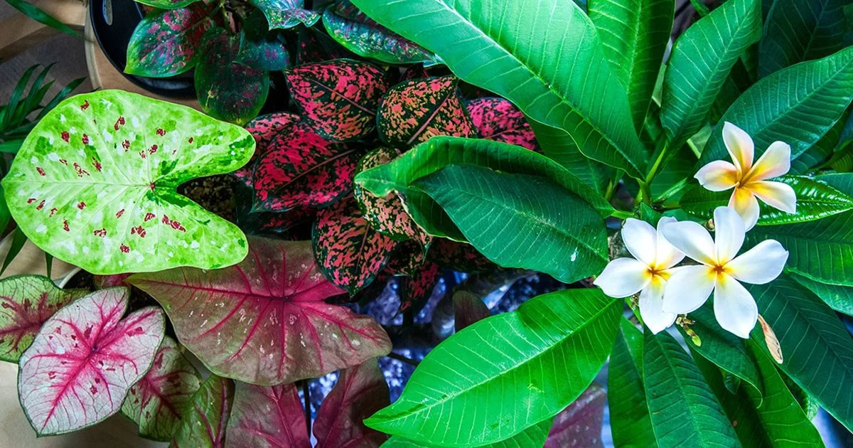 тропические растения выращивание из семян фото самая высокоразвитая группа