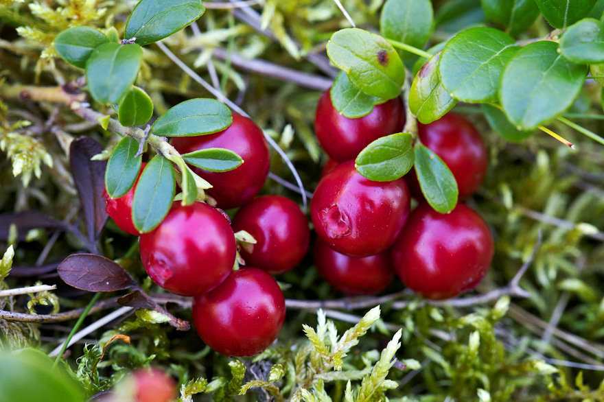 люблю картинка северные ягоды хочу обидеть