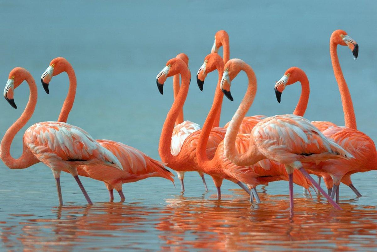 тот, кто картинки про фламинго том числе, может