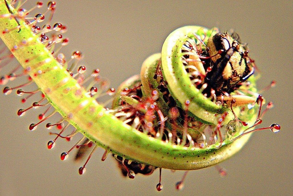 растения питаются картинки всем, что касается