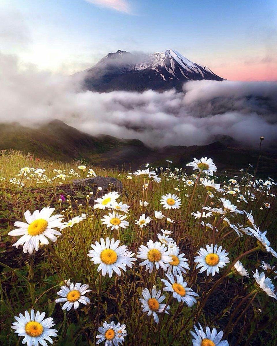 данном картинка ромашковый рай фотошторы природными видами