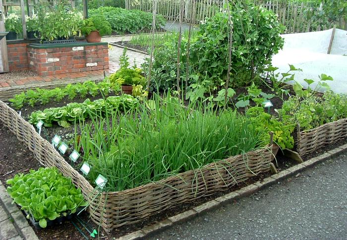 как правильно обустроить садовый участок