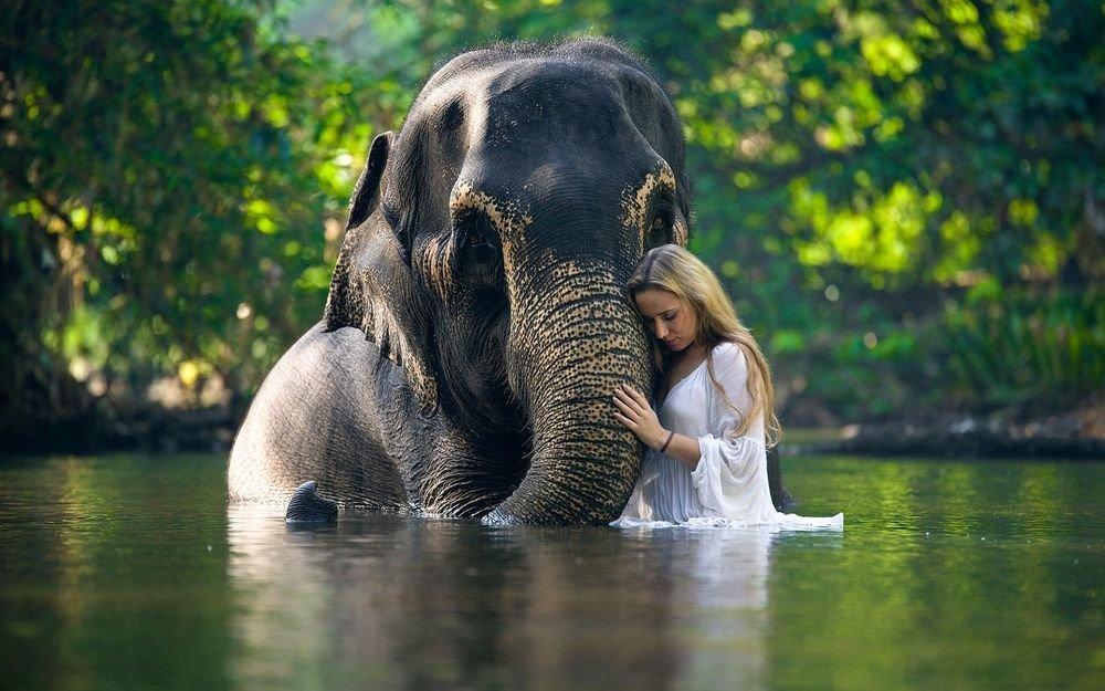Девушка и слон стоят в воде