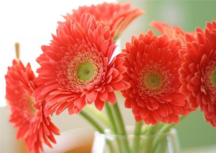шаблонов новогодних фото цветы герберы с днем рождения такому принципу можно