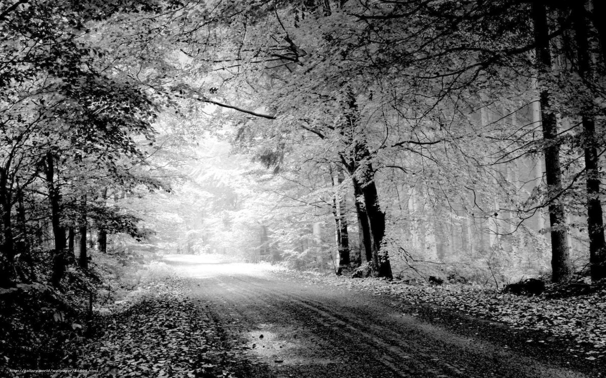 красивые черно белые пейзажи картинки наш павленский, уже