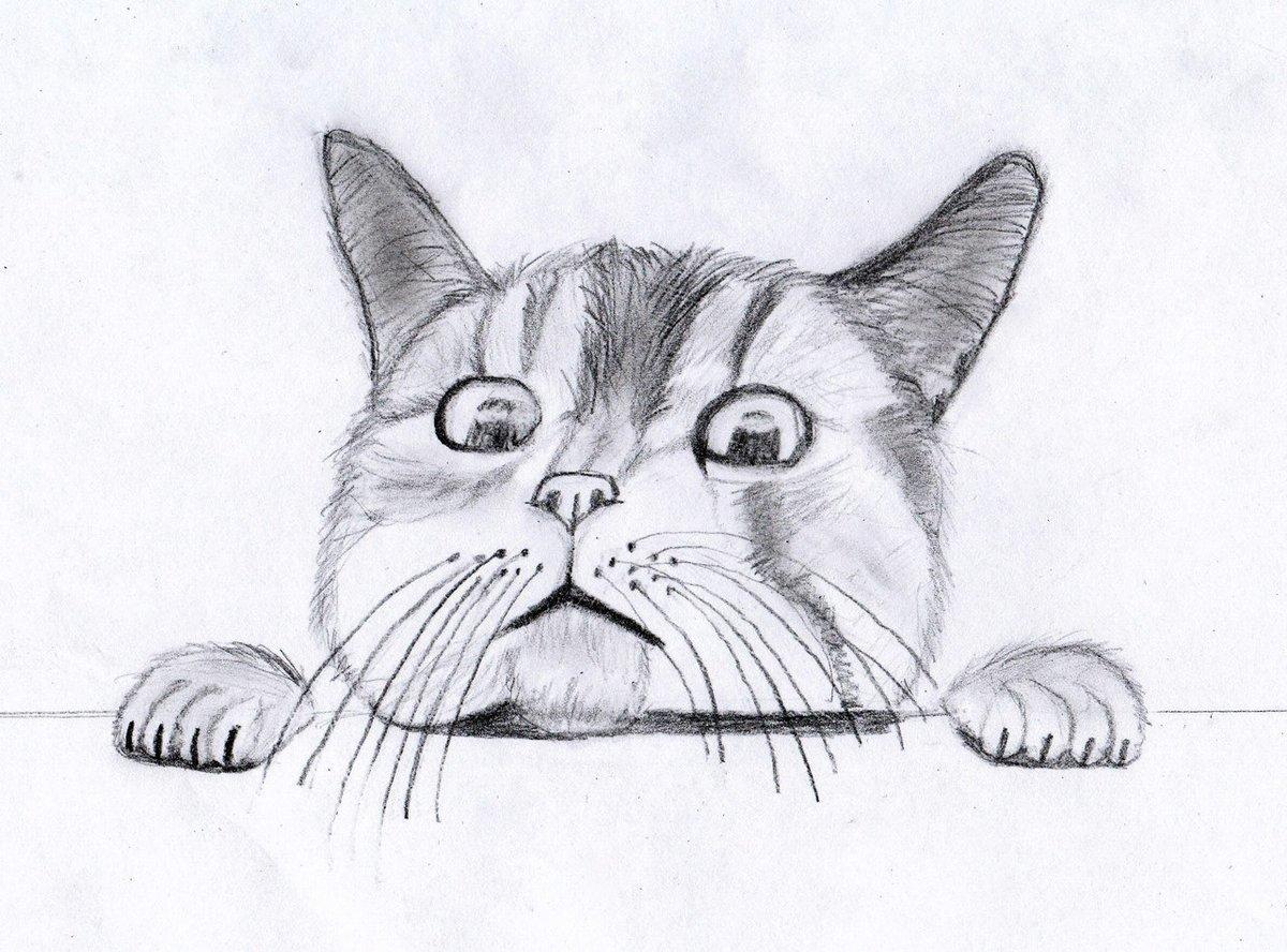 Крутые рисунки карандашом коты