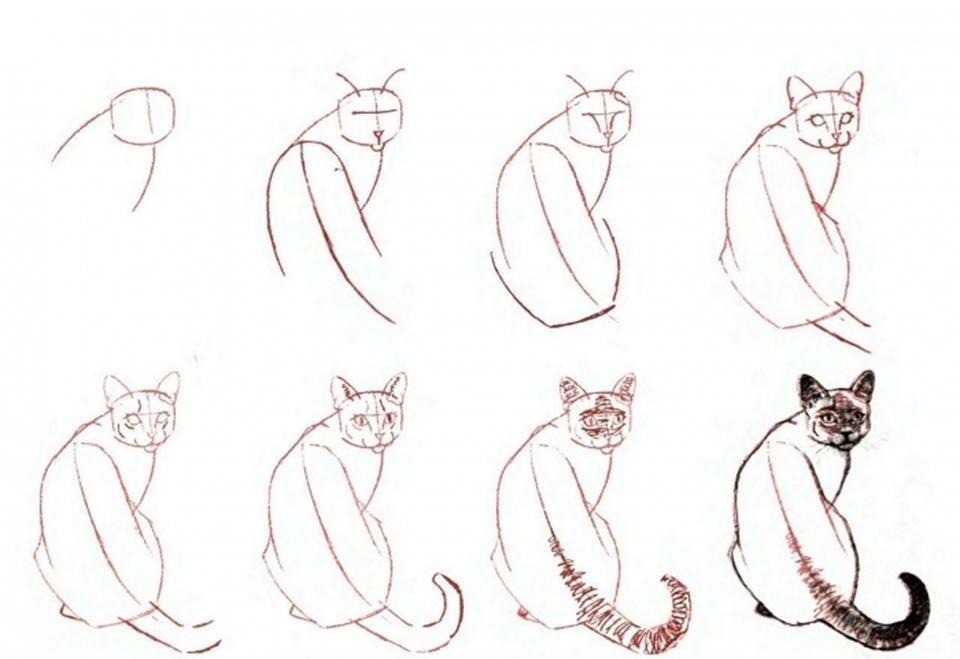 коты картинки поэтапно для нас квартире