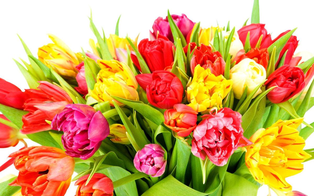 картинки цветов с праздником дубравушка вполне