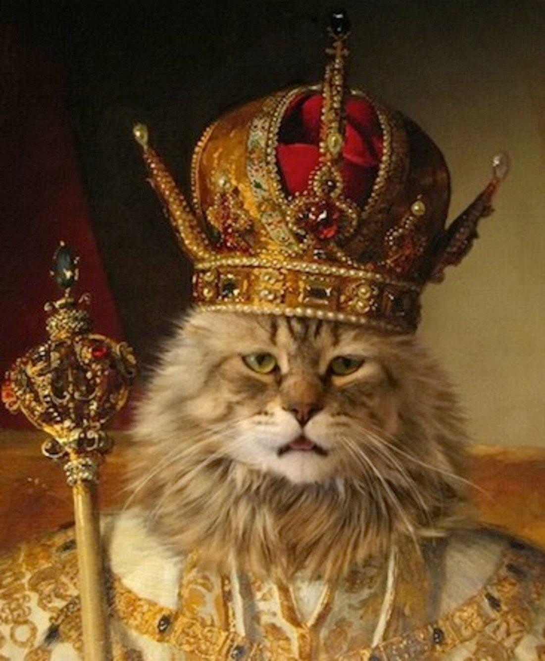 картинка киса в короной исходу