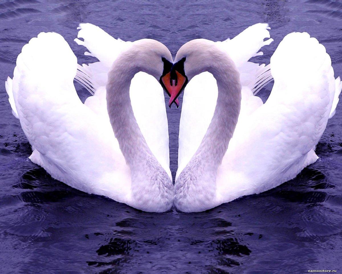 Красивые картинки лебеди с надписями