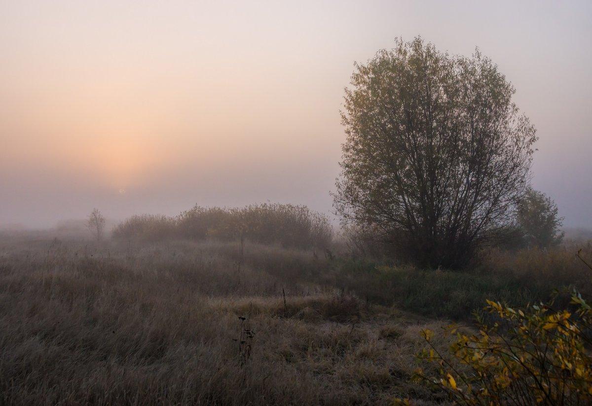 Пробуждениепригород Воронежа, мкр Боровое, луг реки Усманка#пейзаж #природа # утро #рассвет #луг #туман #лес
