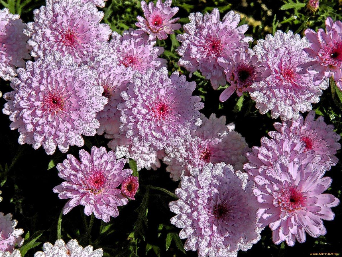 Текстильных, картинка хризантема фото