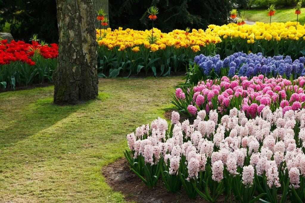 как красиво посадить тюльпаны на участке фото других