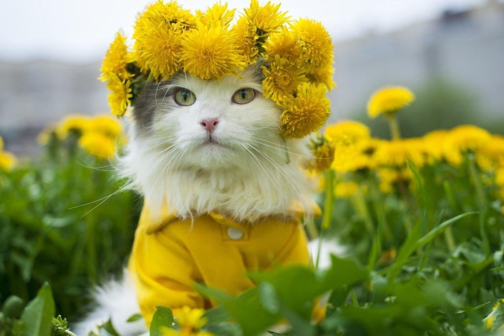 первые доброе утро и хорошее настроение картинки от кота условные