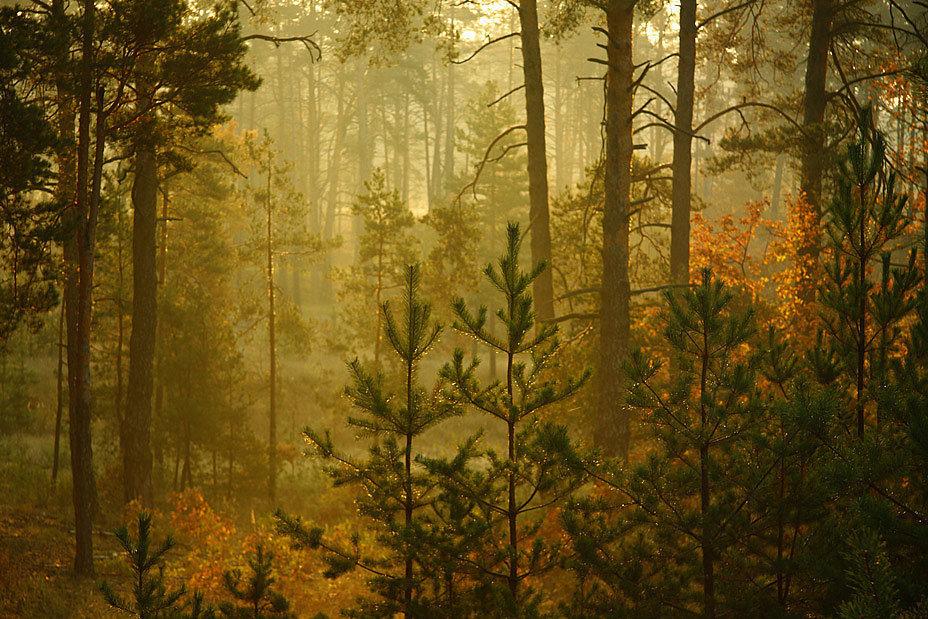 Фотография №801666 в рубрике «Природа». Автор: Олег СамотоÑин