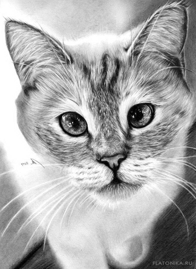 Картинки с кошками нарисованные карандашом