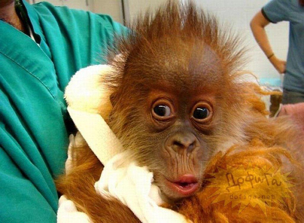 Картинки с обезьянами фото приколы