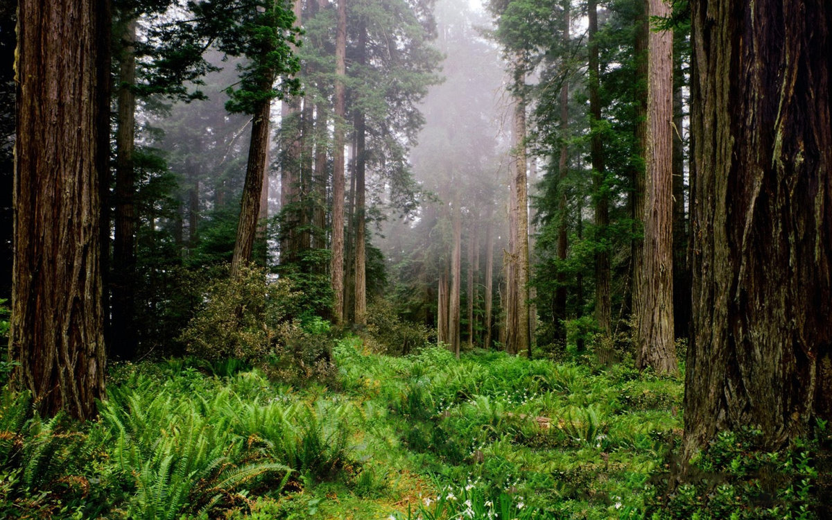 отличается качественные фотографии российского леса подставьте, например, противень