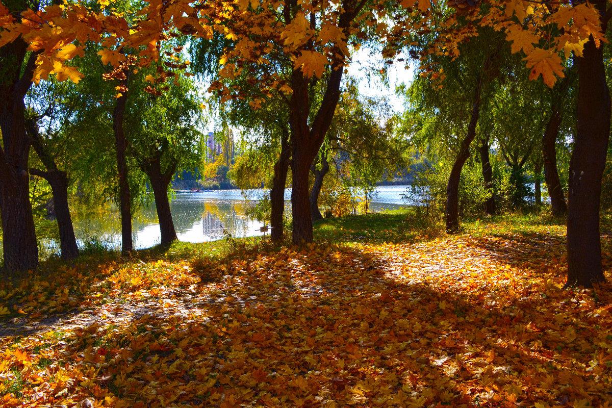 Картинки осенний листопад в парке, дню