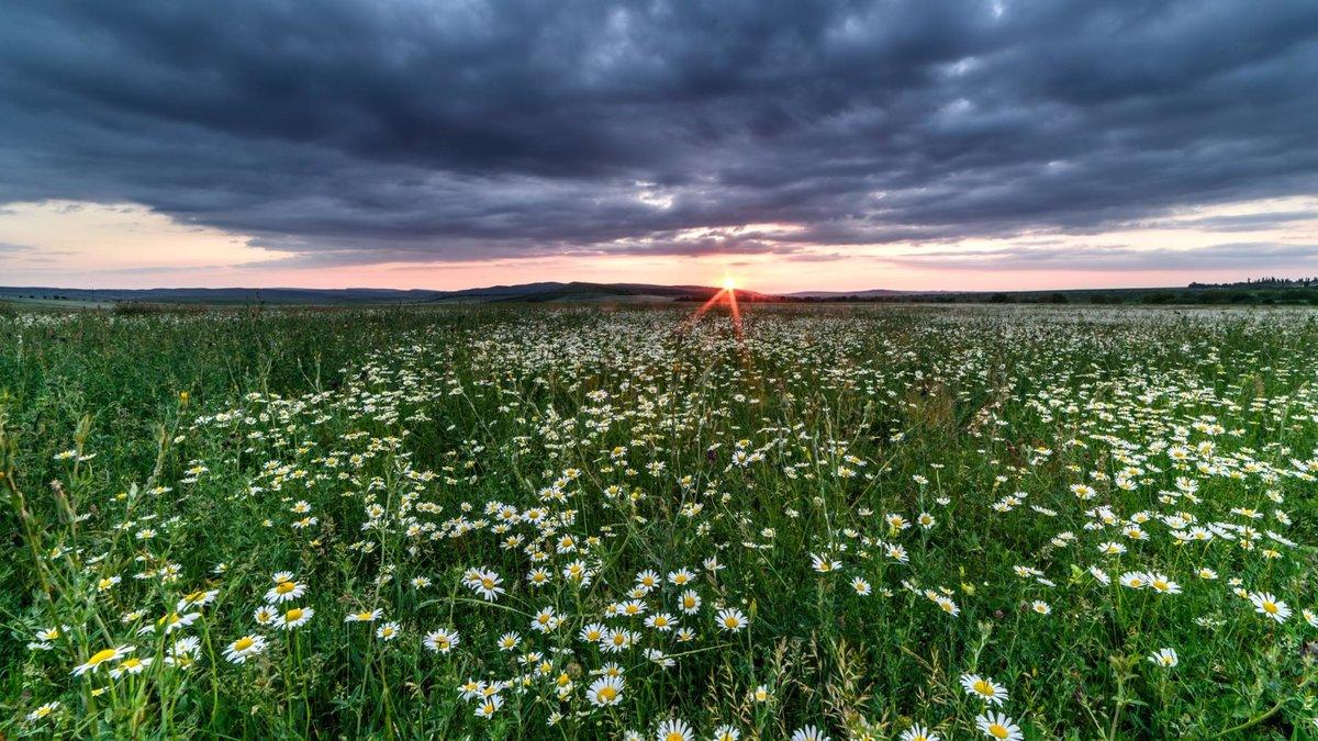 ромашковые поля в ленинградской области с фото пакет услуг