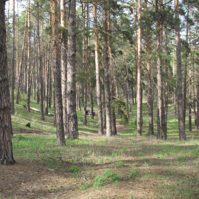 Картинки поселка сосновый бор