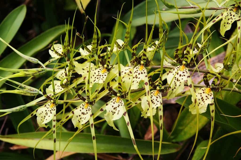 Фото белой орхидеи на черном шелке представителей древних