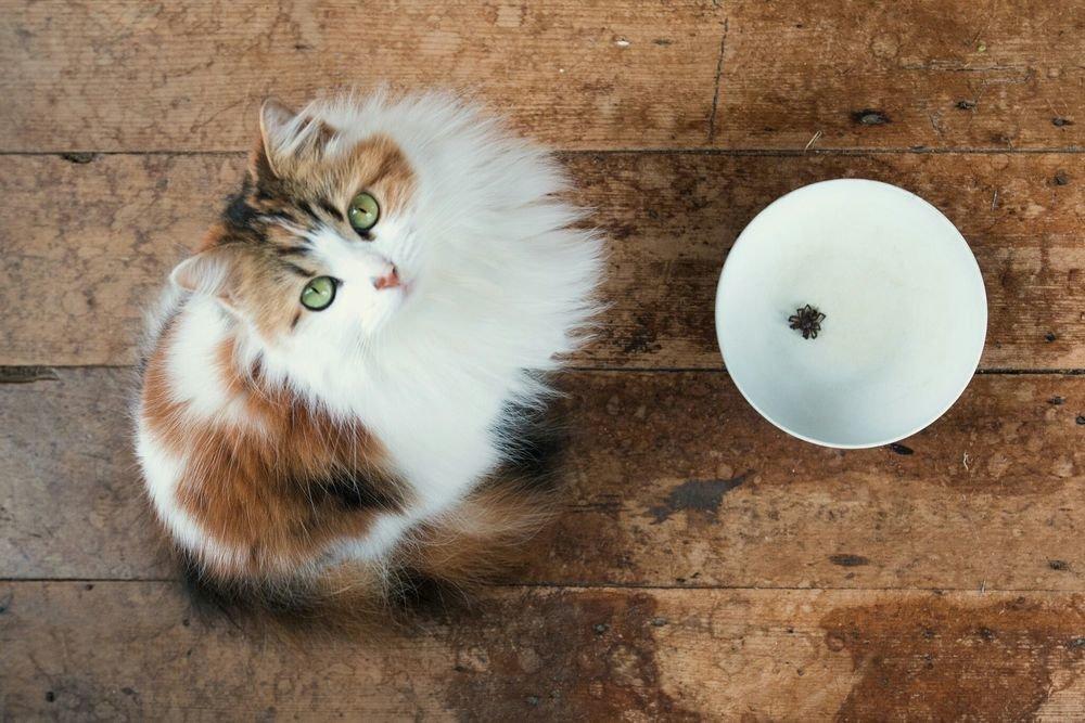 Картинка кошка с тарелкой