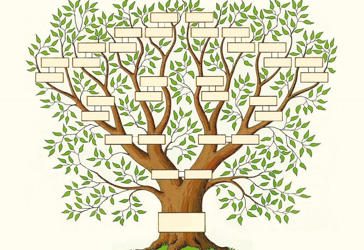 Картинки с родословного дерева