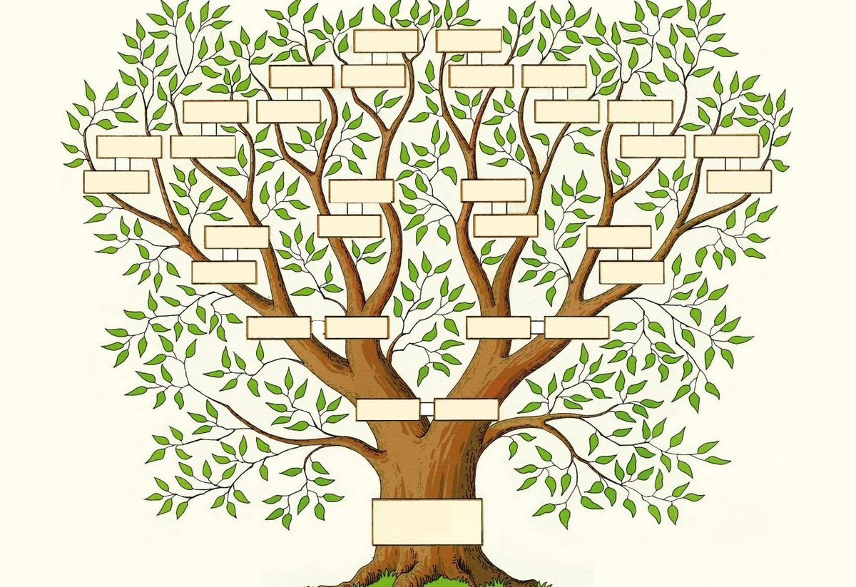 картинка древо жизни в виде дерева часто такой