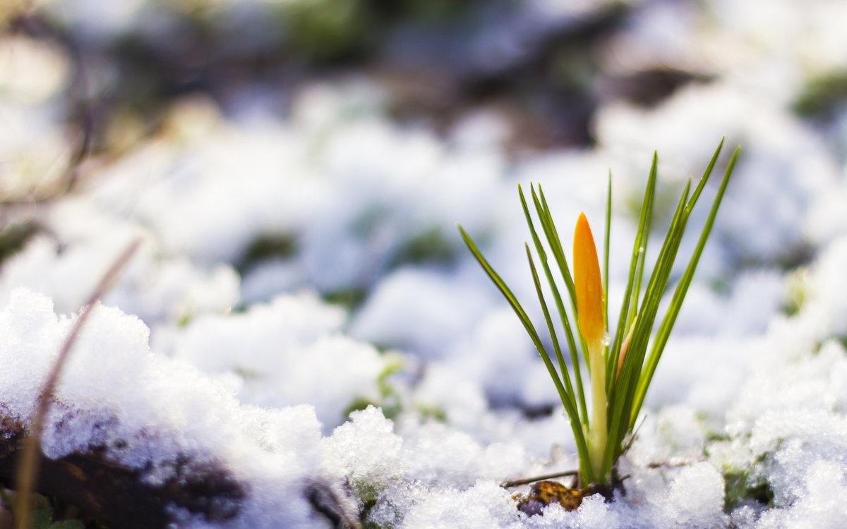 Картинки тает снег природы