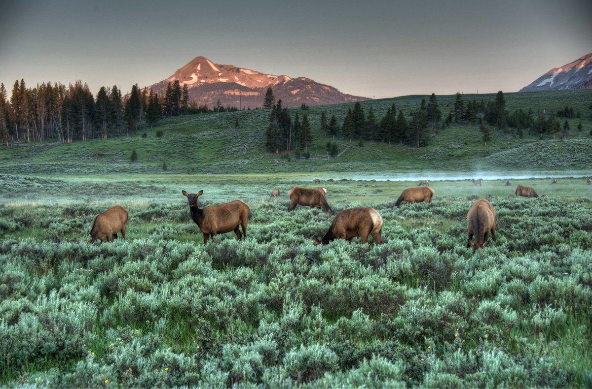 Природа америки картинки животных
