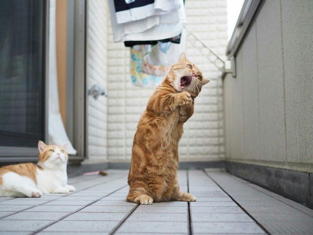 Картинки, прикольные картинки с кошками лучшее