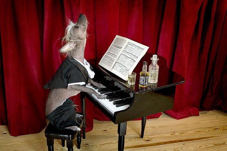 Поздравительных открыток, смешные картинки про рояль