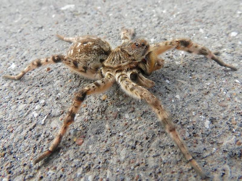 тарантулы крыма фото фотографий много можно