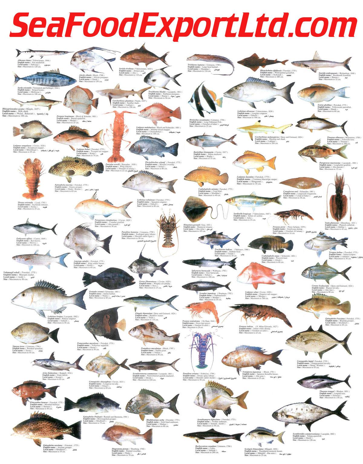 Картинки про рыб из сказок ожерелья