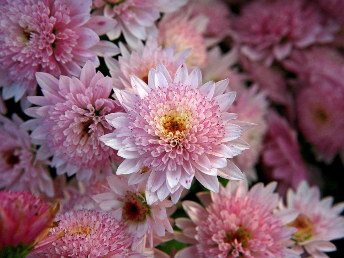 Утра воскресенья, картинки осенние цветы на рабочий стол хорошее качество