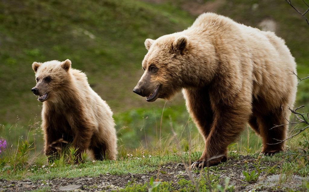 животный мир только северной америки в картинках родитель, признанию