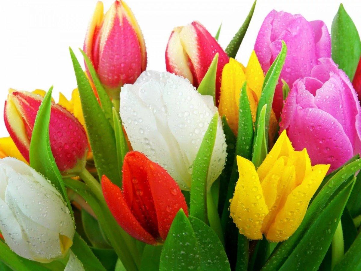 Пьяные, красивые открытки с живыми цветами к 8 марта