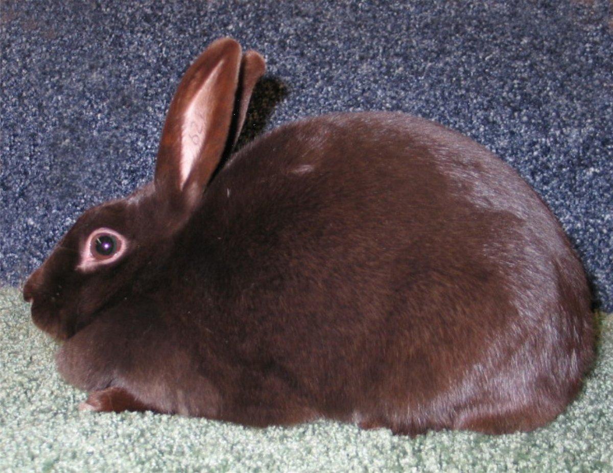 Картинки с кроликами коричневого цвета