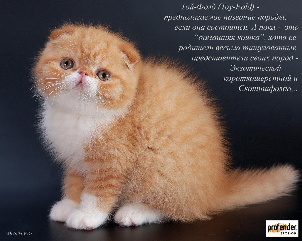 Названия и порода кошек в картинках