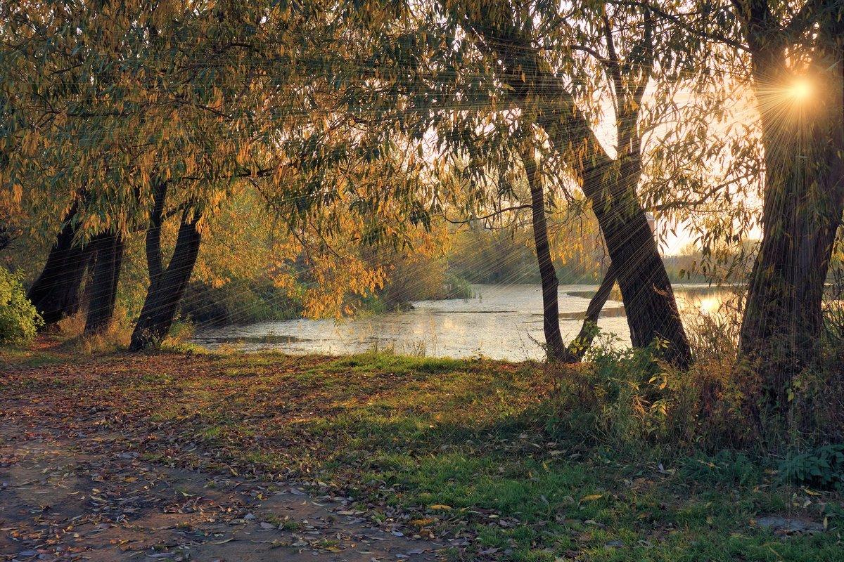 рассветные осенние лучи...#lyudamihailova #город #пруд #утро #осень #прогулка #листопад #деревья #солнце #лучи