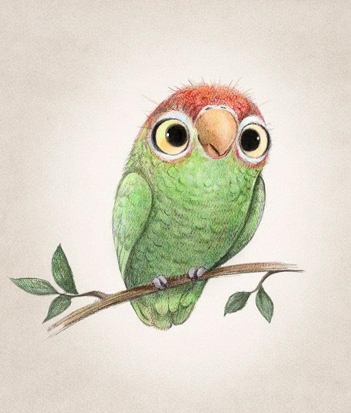 Прикольный попугай рисунок, лет прикольные