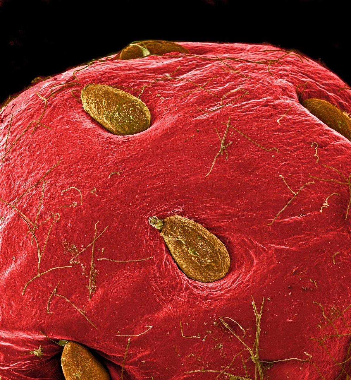 фрукты под микроскопом фото том числе
