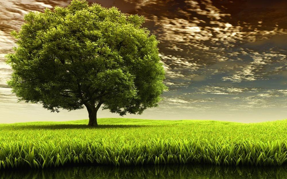 «Дерево с пышной кроной растущее в поле рядом с озером ...