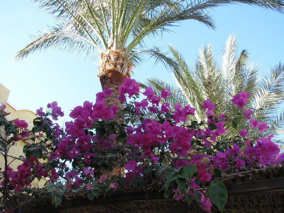 цветы египта названия и фото отличное время