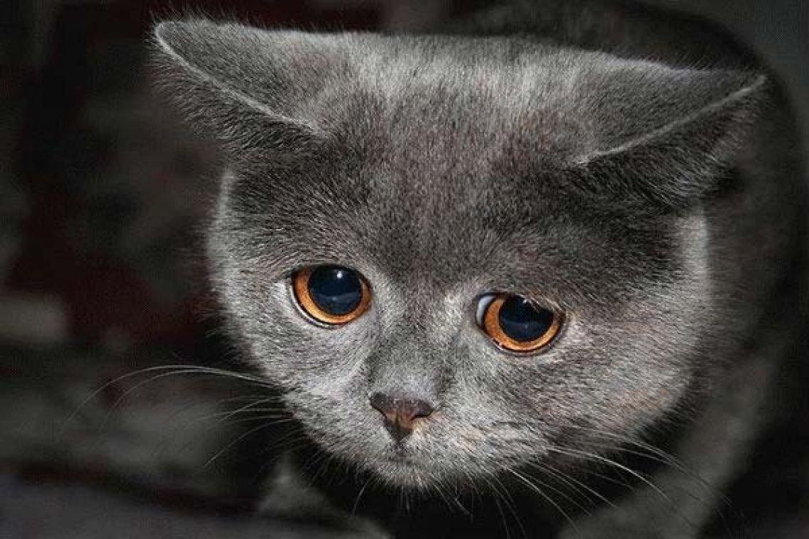 Днем, картинки котов с надписями грустные